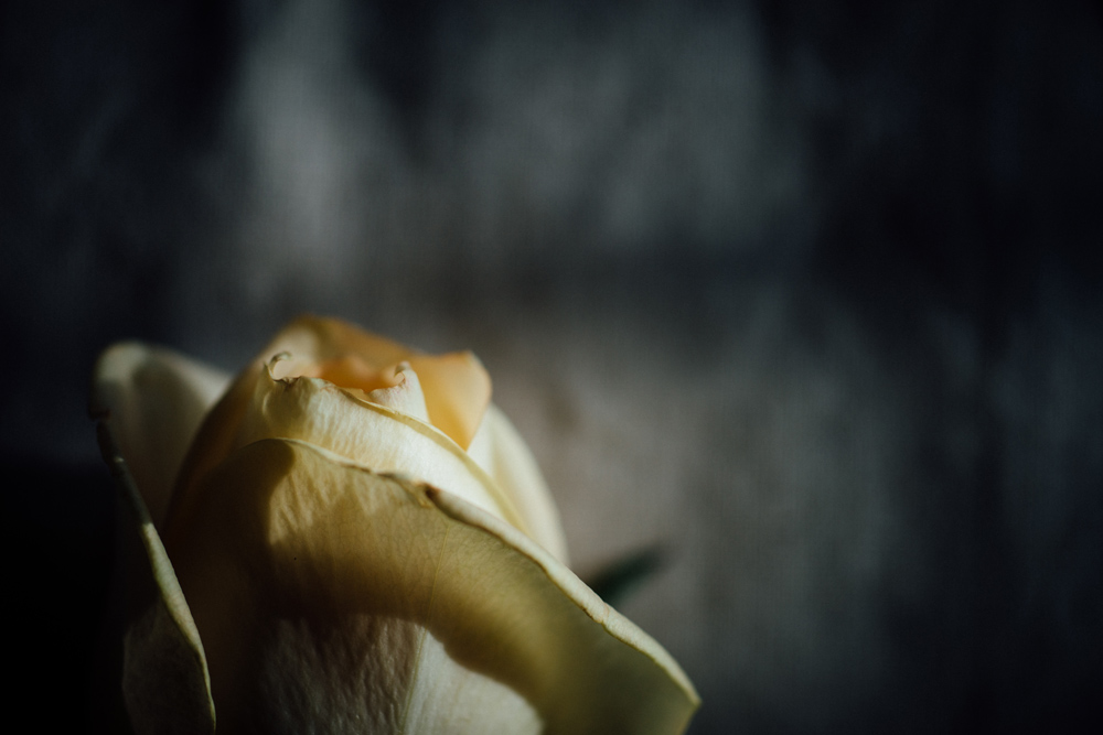 Online photography courses, still life photography
