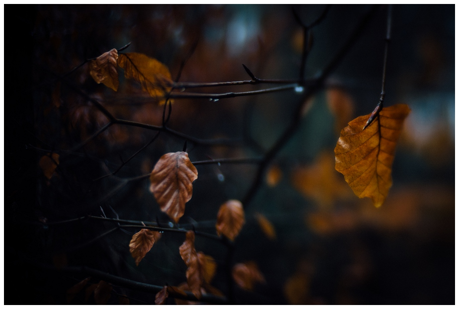 winter foliage - Lensbaby