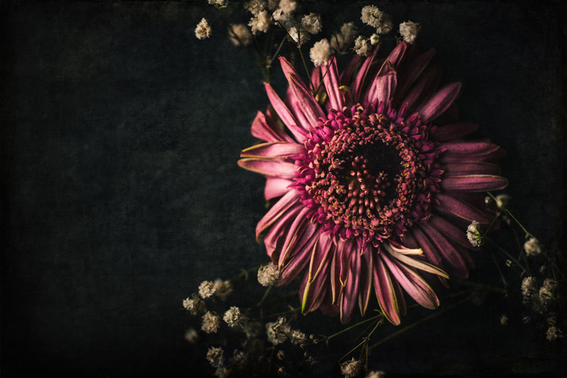 still life photography, floral still life photo, dying flowers on dark background