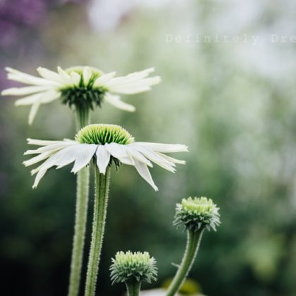 Flower and garden photography workshops