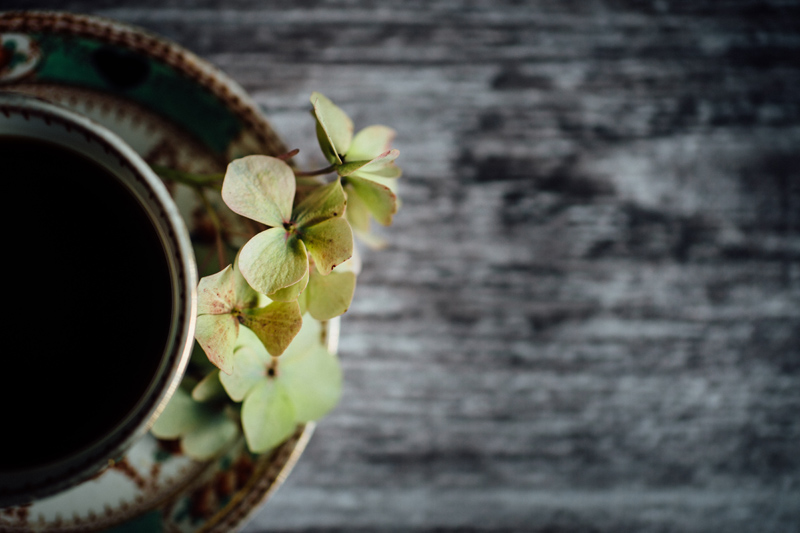Still life photography, vintage teacups and hydrangea flowers