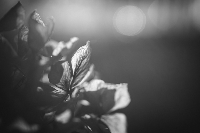 Floral photography, online photography courses