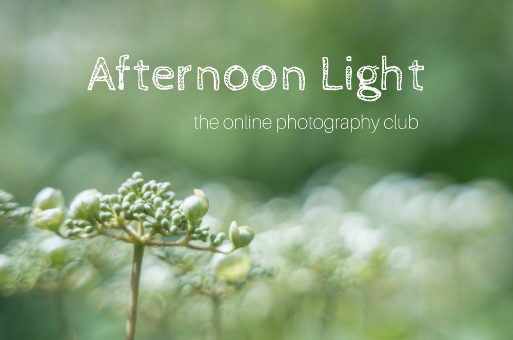 Online Photography Club