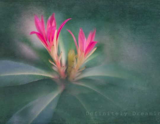 painterly garden photography