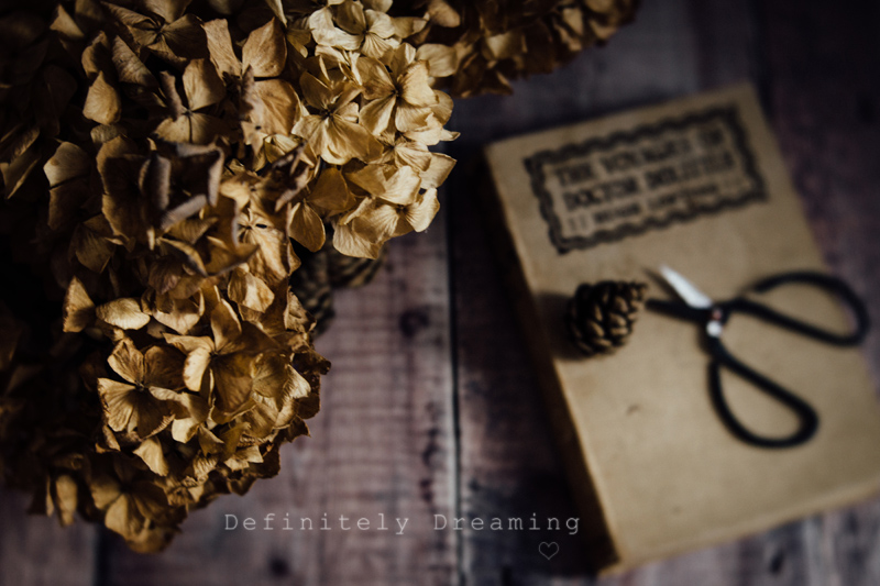 Online photography traing by Janet Broughton