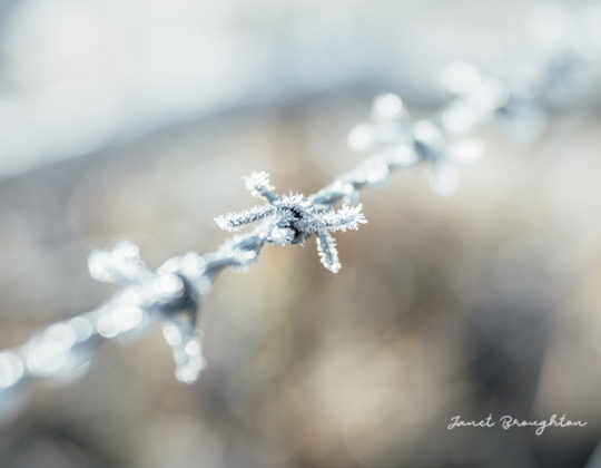 frosty morning with Lensbaby Velvet 85 - photography by Janet Broughton