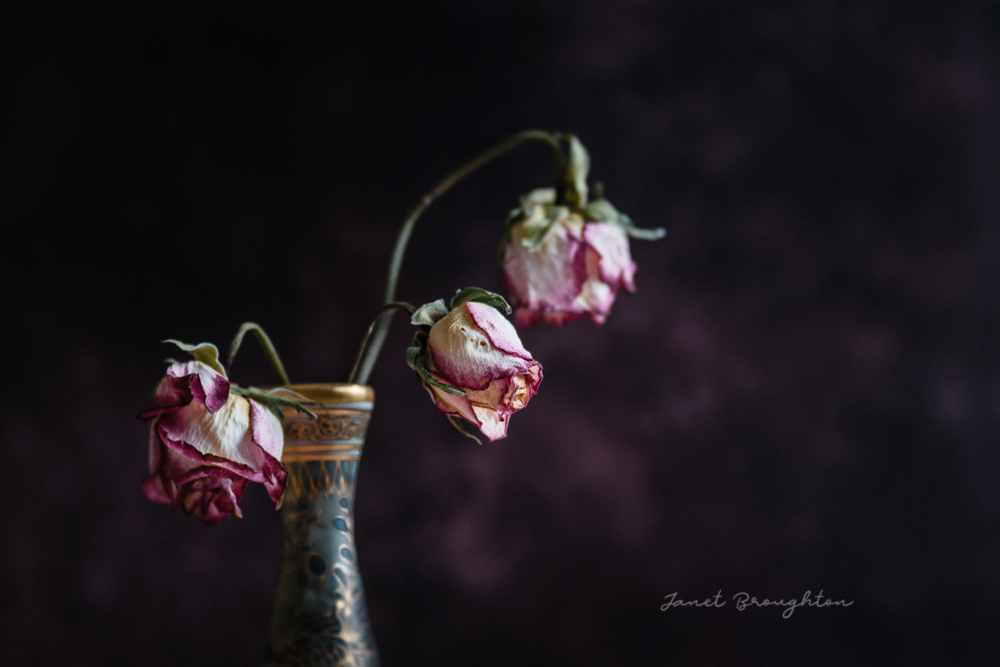 Still life photography by Janet Broughton