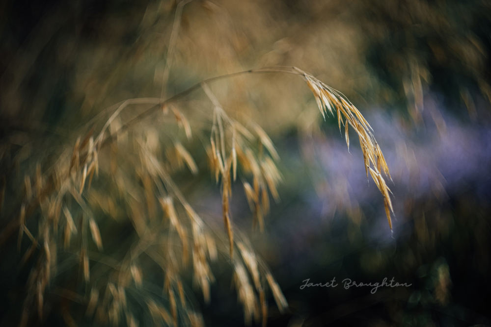 moody nature photography with the Helios 44-2 vintage lens by Janet Broughton