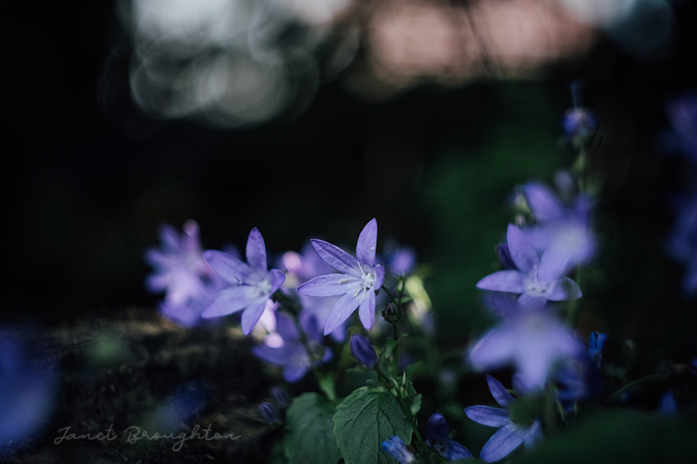 garden photography with Fuji X-T20 and Helios 44-2